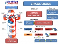 ScientificaMENTE - L'APPARATO CIRCOLATORIO TRASPORTA LE MOLECOLE IN TUTTE LE CELLULE DELL'ORGANISMO